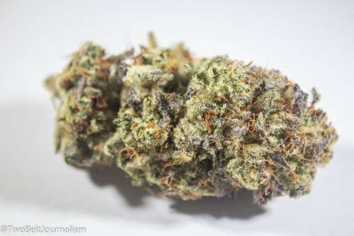Donkey Butter Cannabis Strain Review (Prod. Mother Earth Farms)