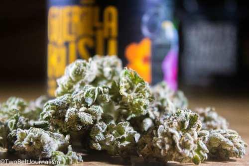 Guerilla Kush Cannabis Strain Review (Prod. Funky Monkey)