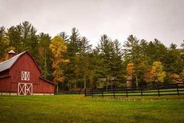 Magnum PI Strain Review (Feat. Treehawk Farms)