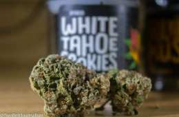 Funky Monkey's White Tahoe Cookies Strain Leaves Much To Be Desired
