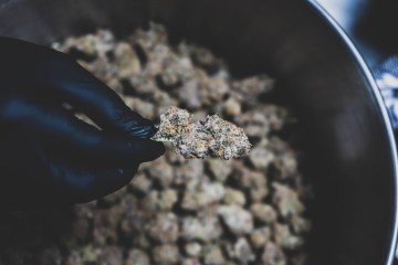Lilac City Gardens Is 20% Off @ Bellevue Marijuana (BelMar) Until The End of December