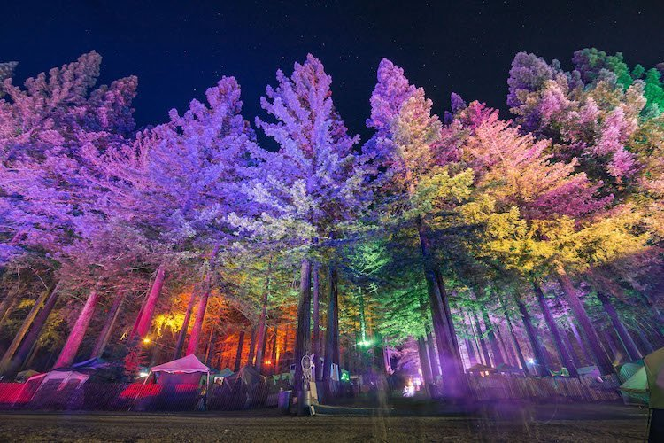 Northern Nights Is The First Music Festival To Sell Weed (Legally) Redwoods-@kristinabaky