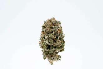 ZoZ Cannabis Takes You For A Ride With Their Sundae Driver Strain