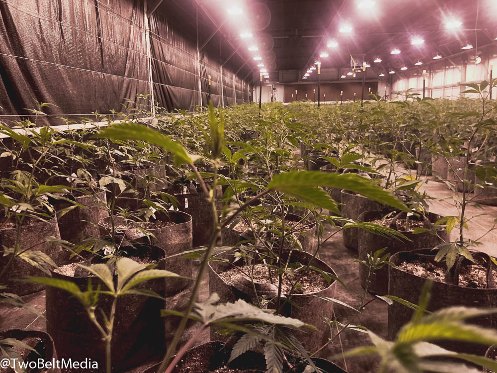 Mother Earth Farms Is Laying An Efficient Blueprint For Craft Cannabis Production