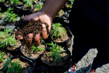 We Are Tired: Being Black In The Cannabis Industry During The Time Of Revolution