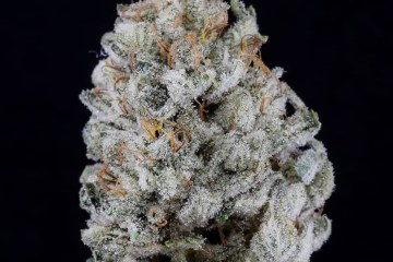 The Piney Garlic Romulan Strain Might Send Your Mind Into Warp Drive And Set Your Body To Stun