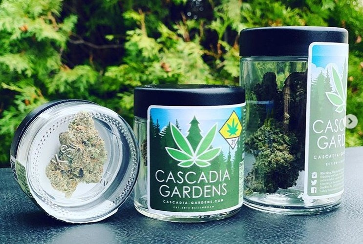 The Purple Pie Strain Review Featuring Cascadia Gardens In Bellingham, WA