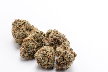 Chem Delight Strain Review Featuring Portland's Cloud Cover Cannabis