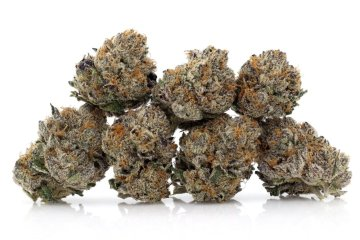 Best Oregon Strain 2020The Runtz Strain Review Featuring Re Up Farms