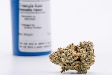 Triangle Kush Flower Best Strains Oregon 2020