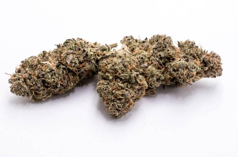 Lemon Ozium Strain Review Featuring Cloud Cover Cannabis In Oregon