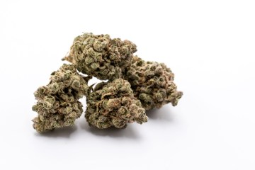 UK Cheese Strain Review Featuring Cloud Cover Cannabis