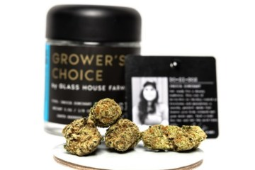 Do-Si-Dos Strain Review Featuring Glass House Farms In California