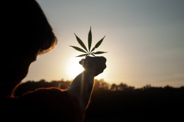Cannabis Professionals Work To Sequentially Grow, Process, Package, And Sell Product