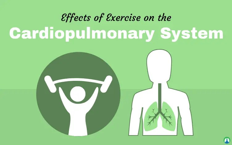Effects of Exercise on the Cardiopulmonary System (Practice Questions)