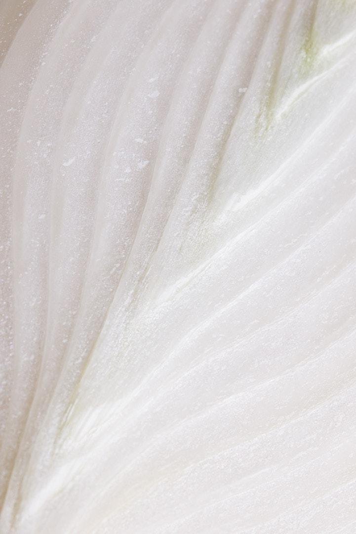macro shot of white onion
