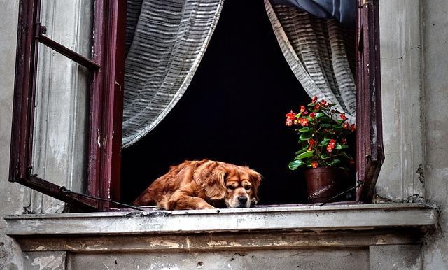 chien sur un rebord de maison