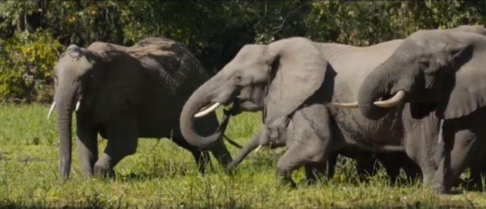 Elephants at Lake Malawi National Park