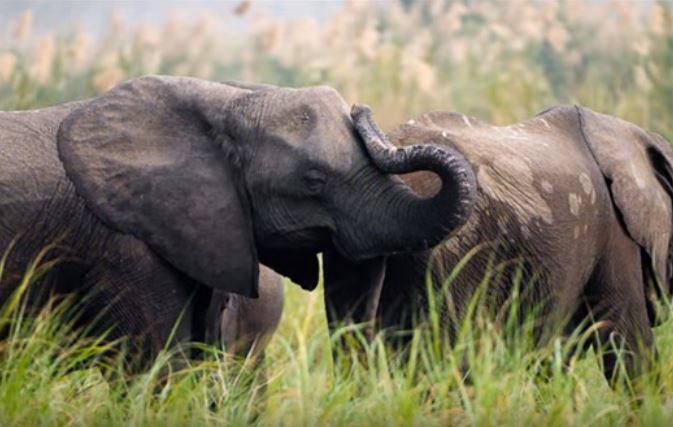 Elephants at Majete Wildlife Reserve