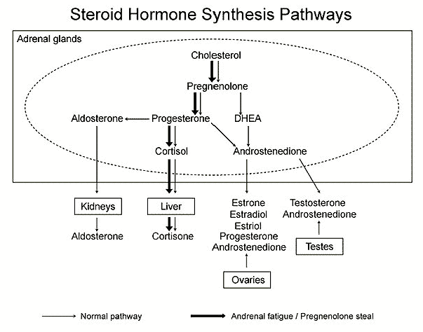 Adrenal production of high progesterone