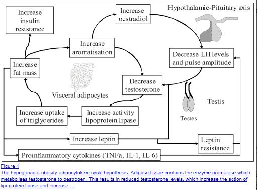 insulin resistance testosterone