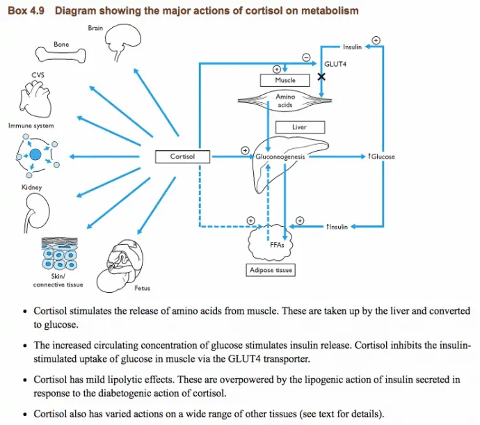 cortisol metabolism and function