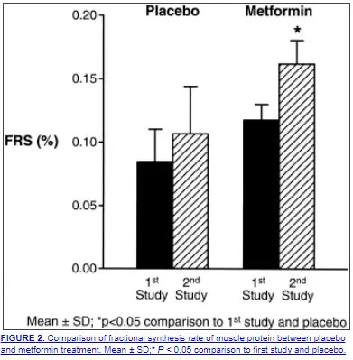 metformin helps increase muscle mass and protein synthesis