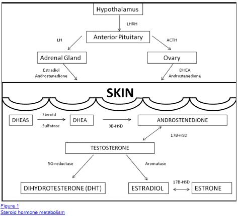 effect of hormones on the skin