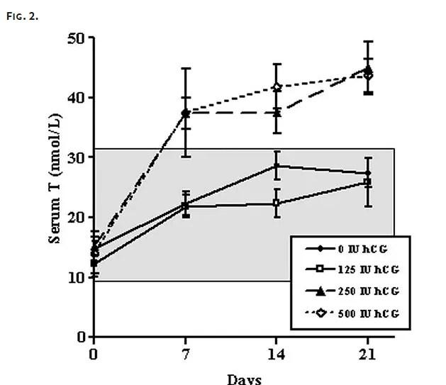 serum testosterone rises in response to hCG