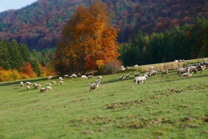 Malebné pasienky pred vstupom do lesa