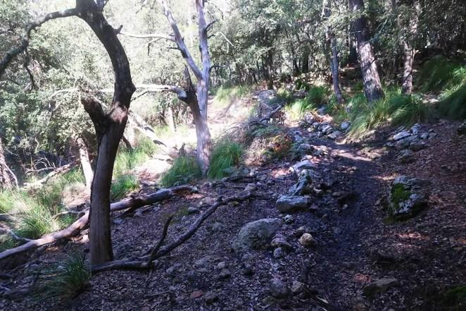 Lesný trail
