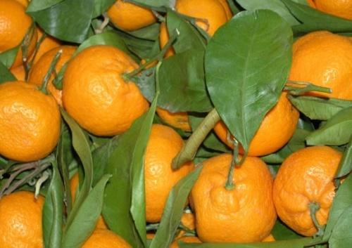 Mandarine gratinate