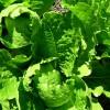 Paste cu salata verde