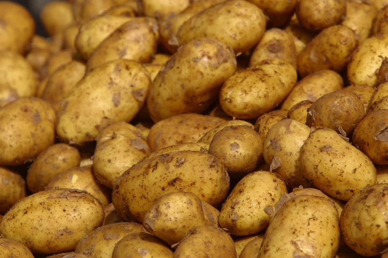 Cartofi Harz