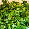 Salată_clasică_de_verdeţuri_3