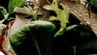Salata de untisor cu pui