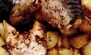 Macrou_la_cuptor_cu_cartofi