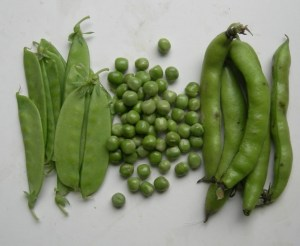 Beans-and-Peas