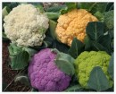 Seasonal Eats: Broccoli, Cauliflower and Romanesco