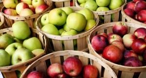 apples-750x400