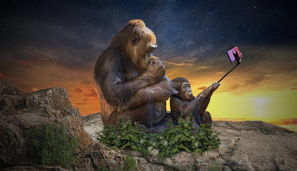 monkey-3554261_960_720