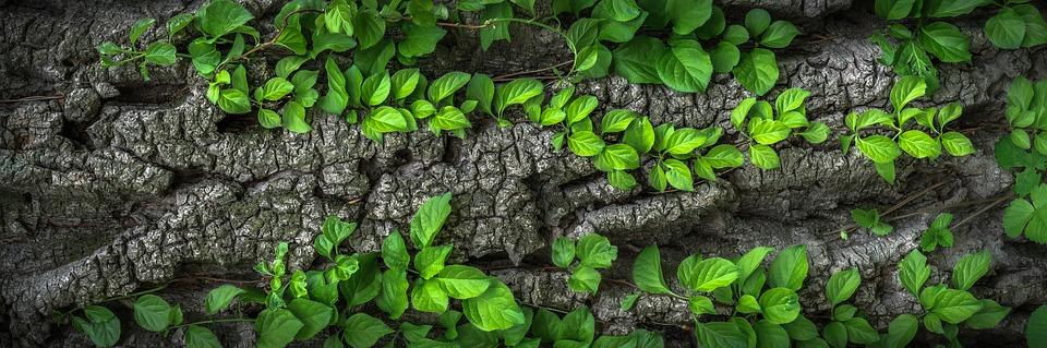 wood-1350175_960_720