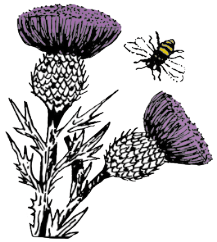 thistle-bee-restoration-yard-logo