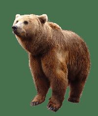 Bicho do dia: Urso