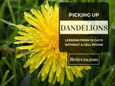 Picking Up Dandelions