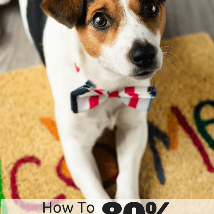 How To Save 80% On Puppy Shots