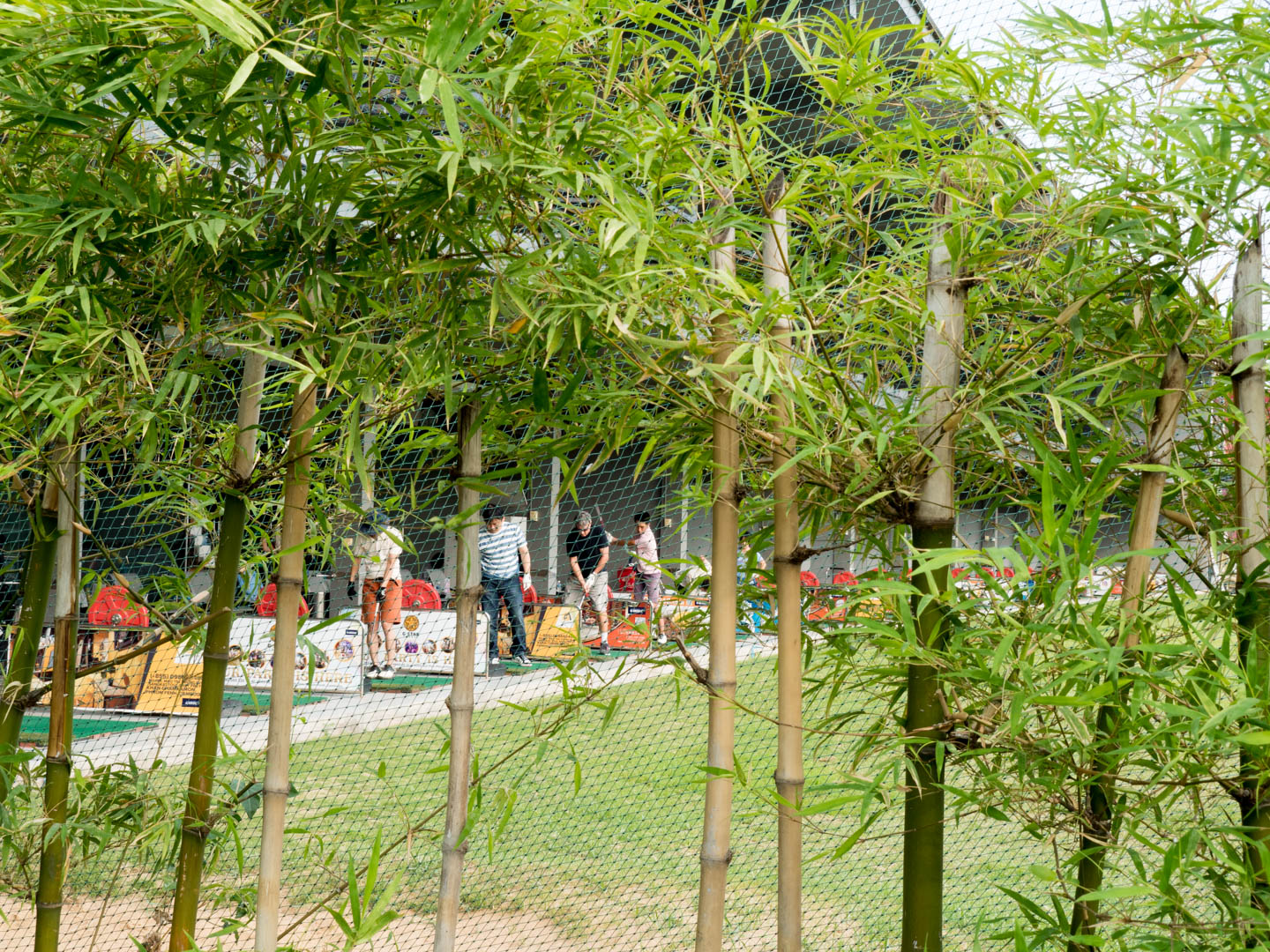 driving range seen through the bamboo
