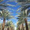 Viva Palm Desert!