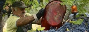 Wijnreizen Abruzzo, Italië