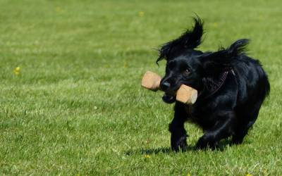 Can Different Types of Training Confuse the Dog?